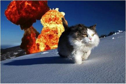 catexplode